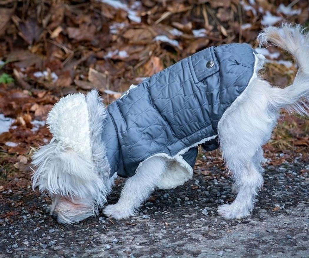 ¿Tengo que abrigar a mi perro en invierno?