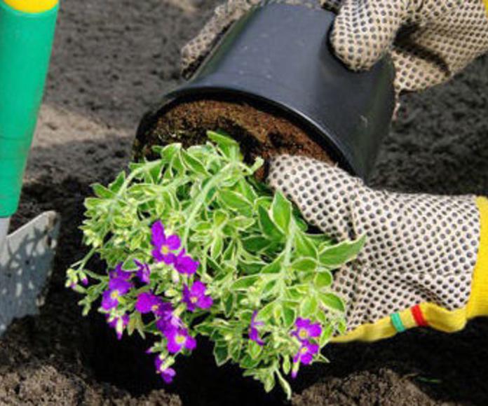 Jardinería: Servicios de Manglobal 2013 SL