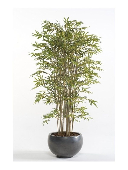 Árbol bambú acababo Deluxe: ¿Qué hacemos? de Ches Pa, S.L.