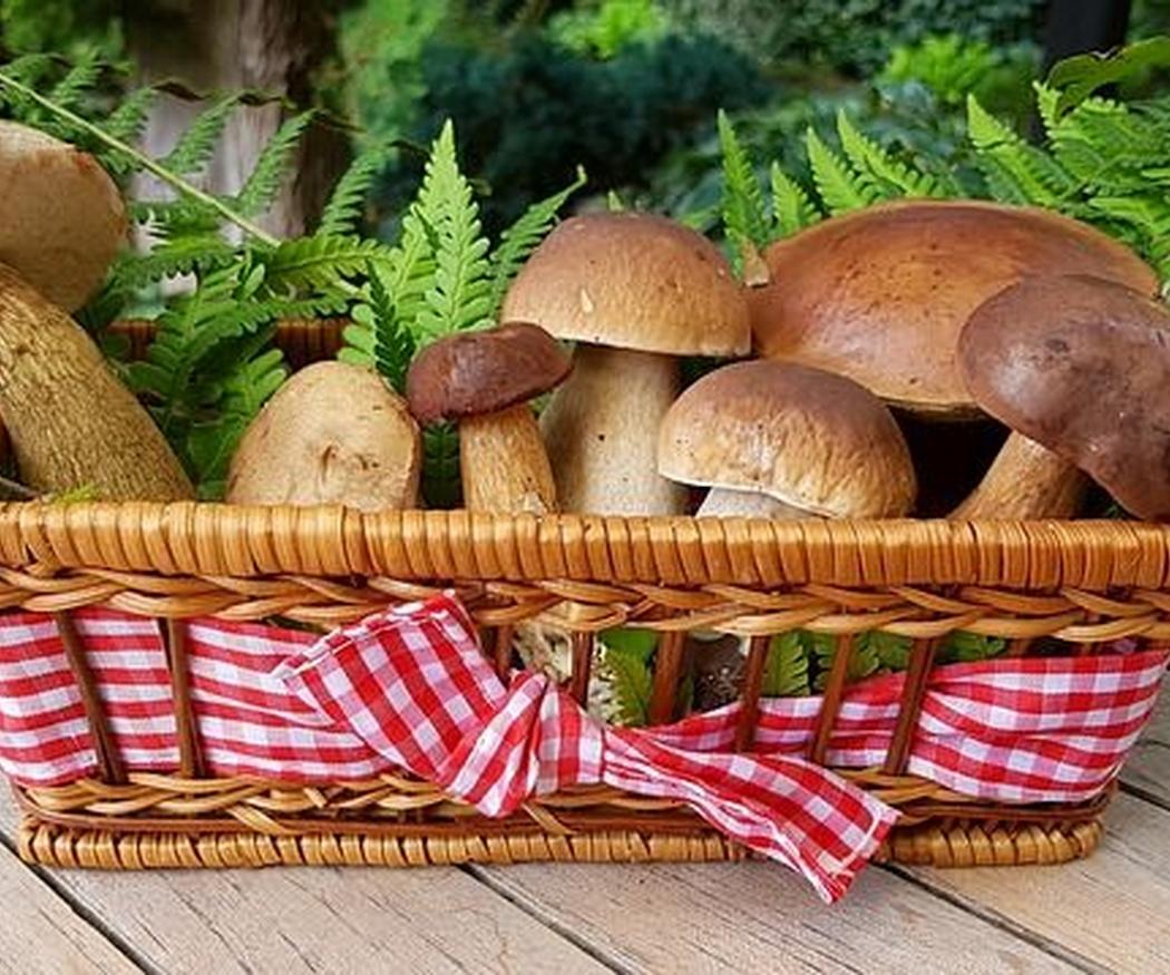 La importancia de las cestas de mimbre en la micología