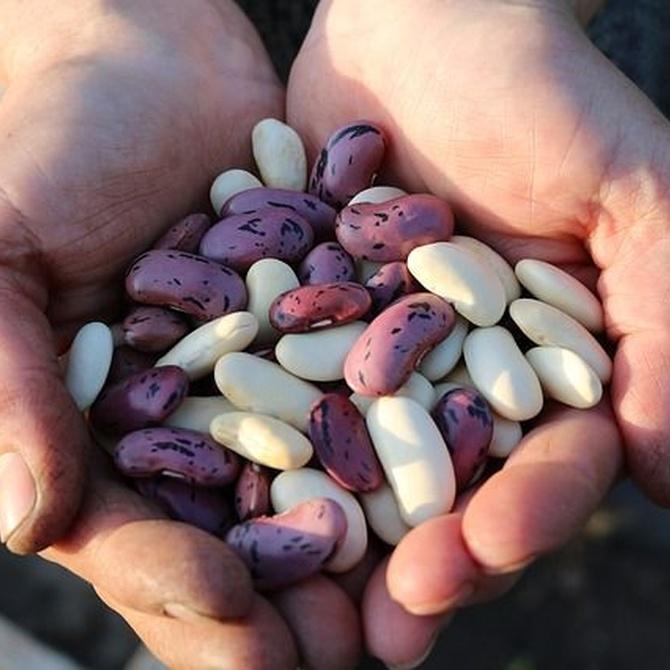 La importancia de las legumbres en nuestra dieta