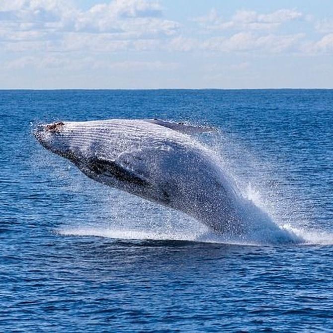 ¿Qué ballenas puedes ver en Tarifa?