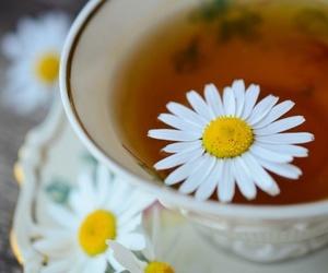Principales diferencias entre homeopatía y naturopatía