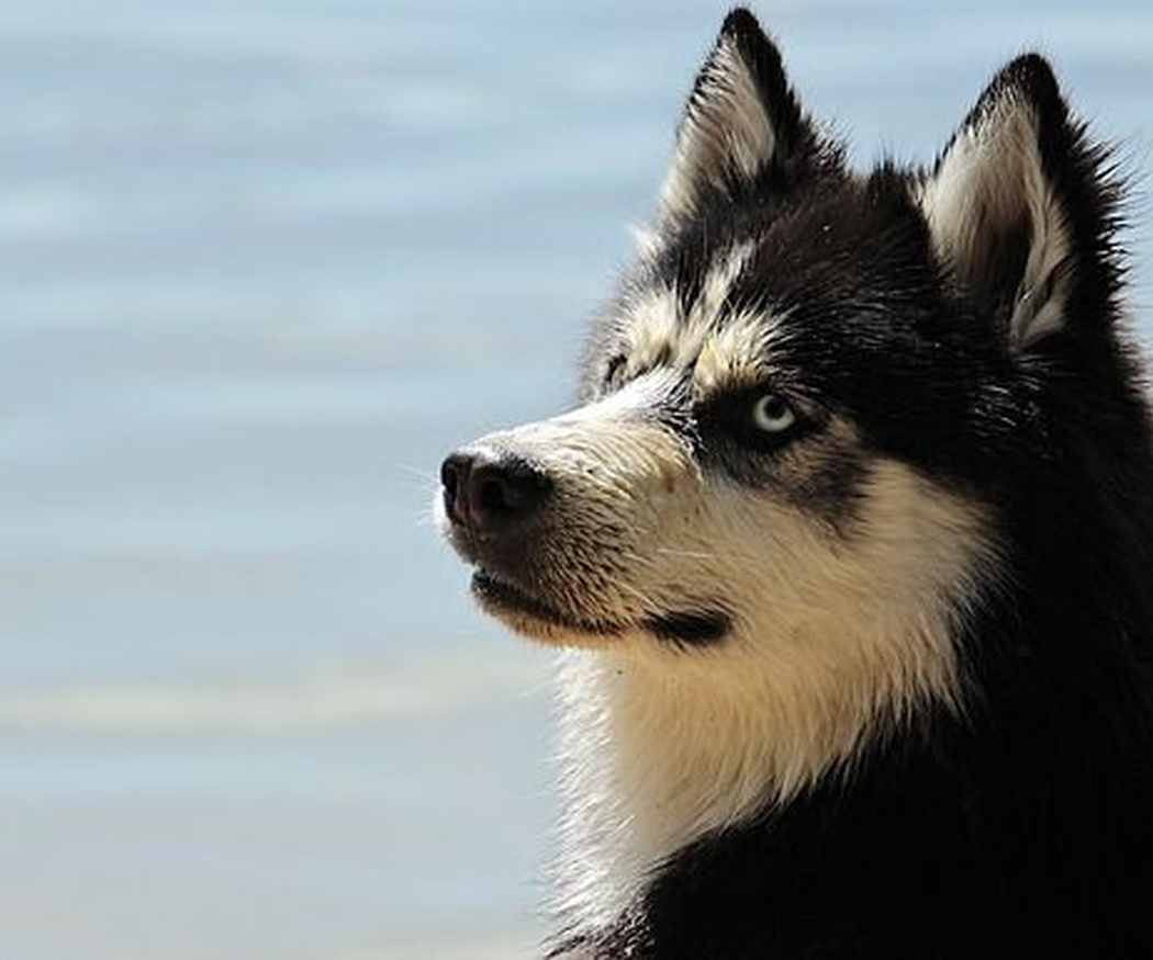 Beneficios del omega 3 para el pelo de perro