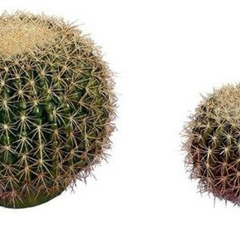 Cactus: CATÁLOGO de Fernando Gallego, S.C.P.