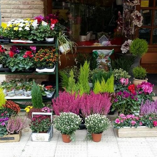Floristerías en  | Floristería Campo y Jardín