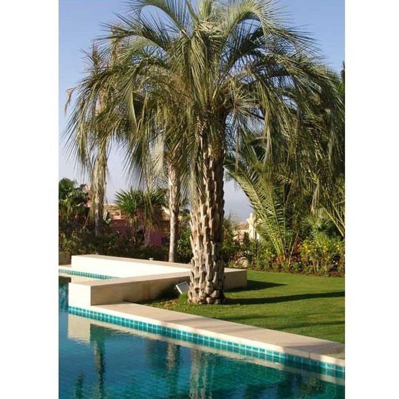 Piscinas: Productos y servicios de Vivero Fantastic Gardens
