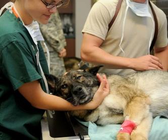 Peluquería de mascotas: Servicios de Clínica Veterinaria Minuvet León-Urgencias 24h
