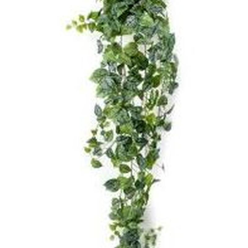 Arbusto colgante Scindapsus Pictus: ¿Qué hacemos? de Ches Pa, S.L.