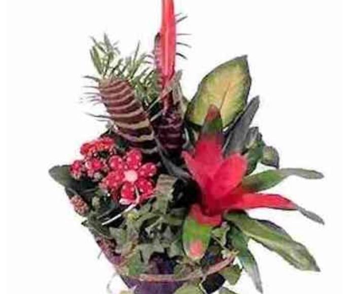 1 combinación de plantas: Catálogo de Regalos de Floresdalia.com