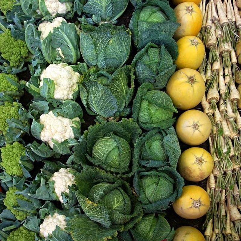 Venta y distribución: Servicios de Agronatural