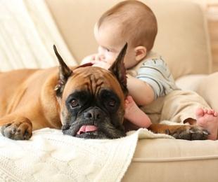 Perros y niños, una combinación que hay que cuidar
