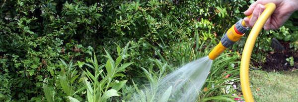 Mantenimiento : Servicios  de Jardinería Naranjo