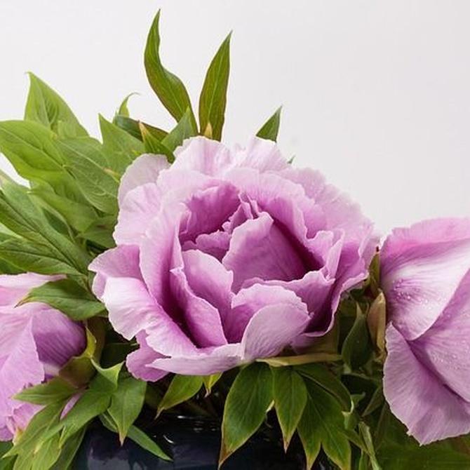 Consejos a la hora de regalar flores