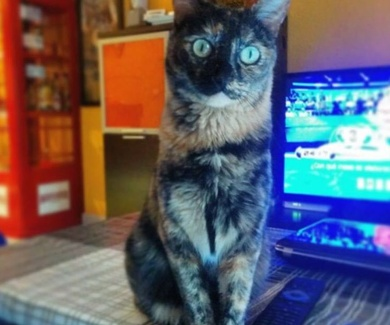 Adopta una gata