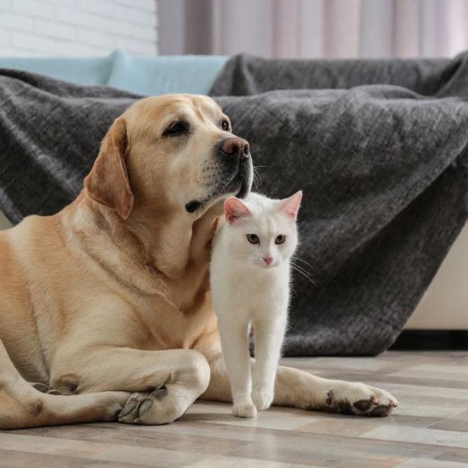 Mascotas y tarima flotante, ¿es posible?
