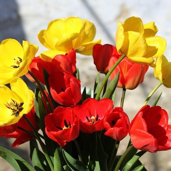 Flores para diferentes ocasiones