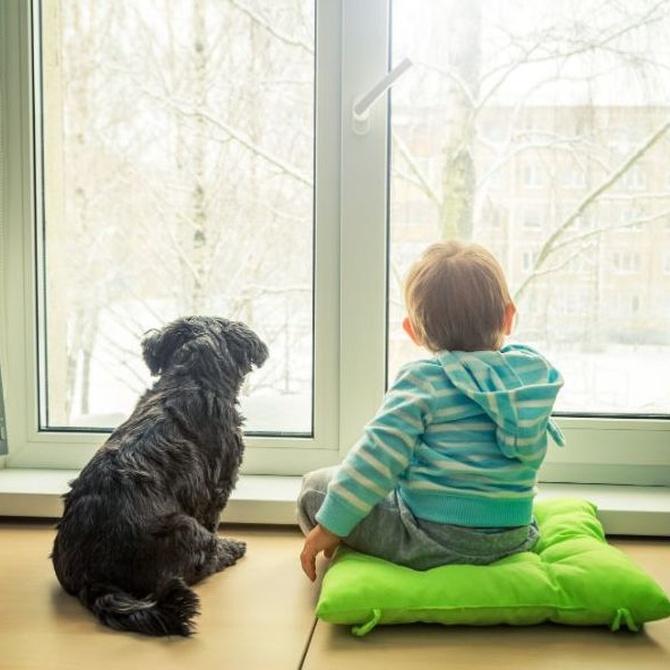 Las ventanas y el aislamiento