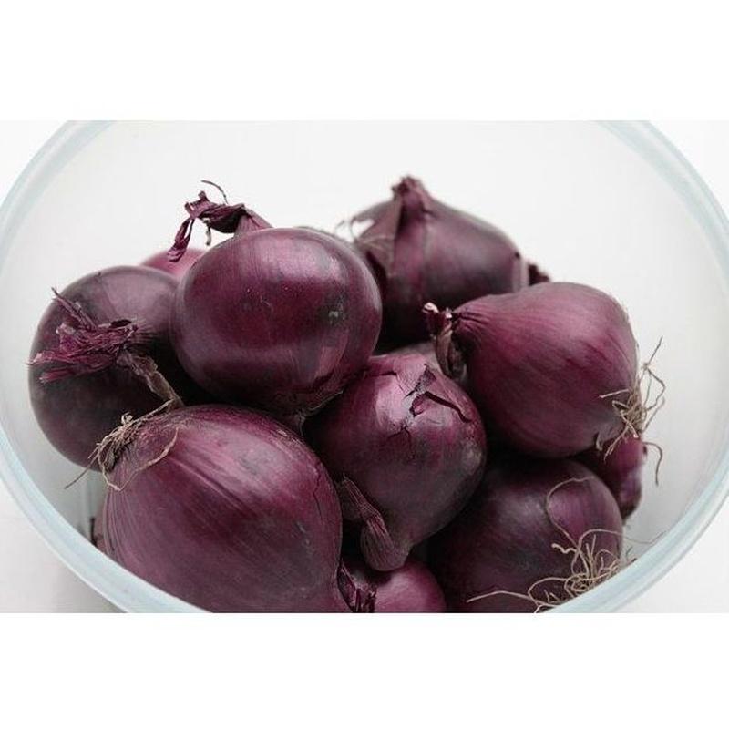 Cebolleta roja: Productos de Mundifruit