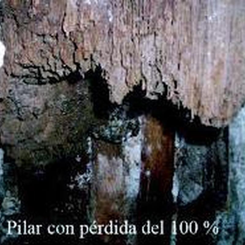 Tratamientos de la madera: Servicios de Abando Desinfecciones