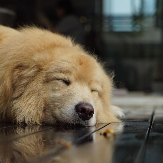 La importancia de los cambios de conducta de tu mascota