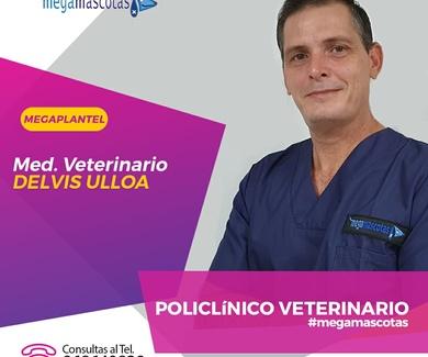 Deivis Ullo. Veterinario de Megamascotas
