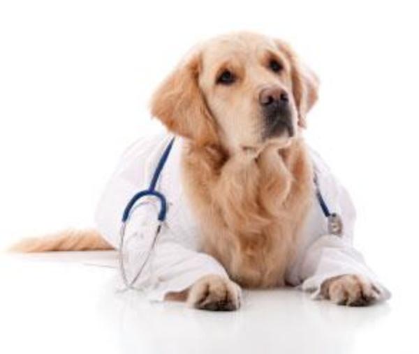 Clínica veterinaria: Servicios de Clínica Veterinaria Jacinto Benavente