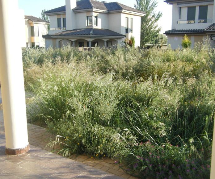 Proyecto paisajismo Ches Pa, antes/después y pasados los años en jardín particular.........Antes.
