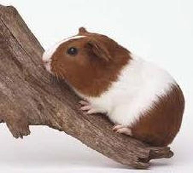 Tienda de roedores : Servicios de Cuore Tienda de Animales
