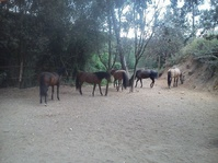 Nuestros caballos pasan ratos en manada!!