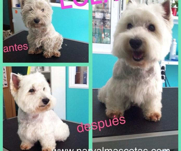 Peluquería canina y para otras mascotas: Productos y Servicios de Narval Mascotas