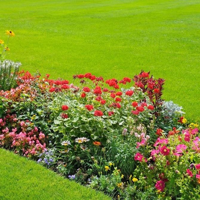 ¿Cuándo hay que fumigar el jardín?