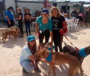 Segunda Oportunidad - Perros en adopción