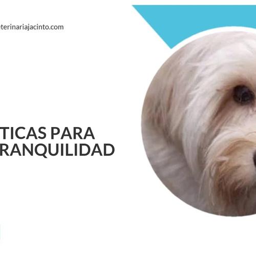 Clínica Veterinaria Jacinto Benavente