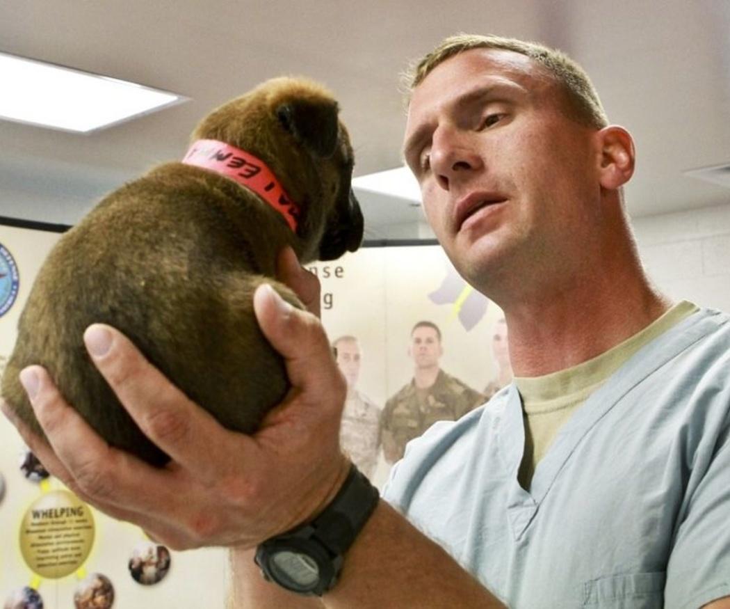 ¿Qué vacunas debes poner a tu perro?