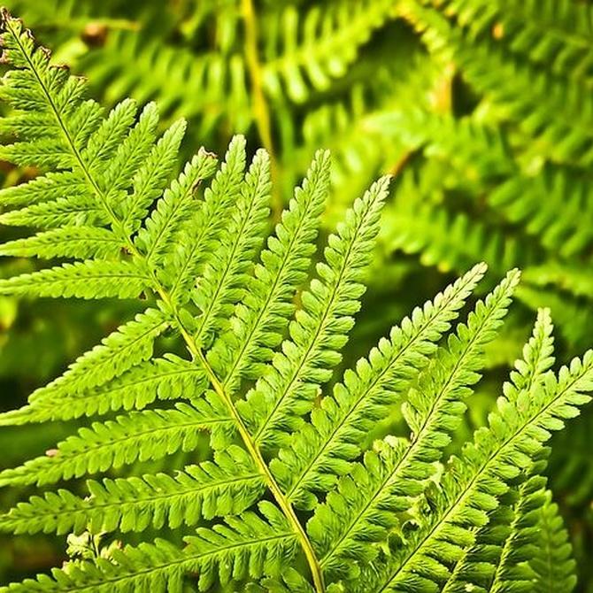 La importancia de la limpieza del bosque