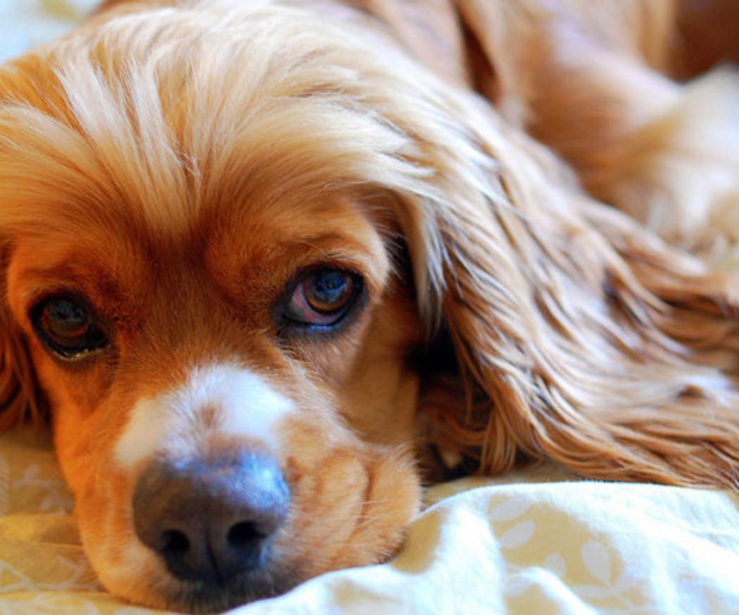 Consejos para la alimentación de tu perro