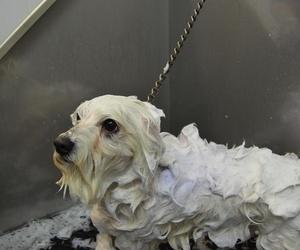 Peluquería canina en Reus