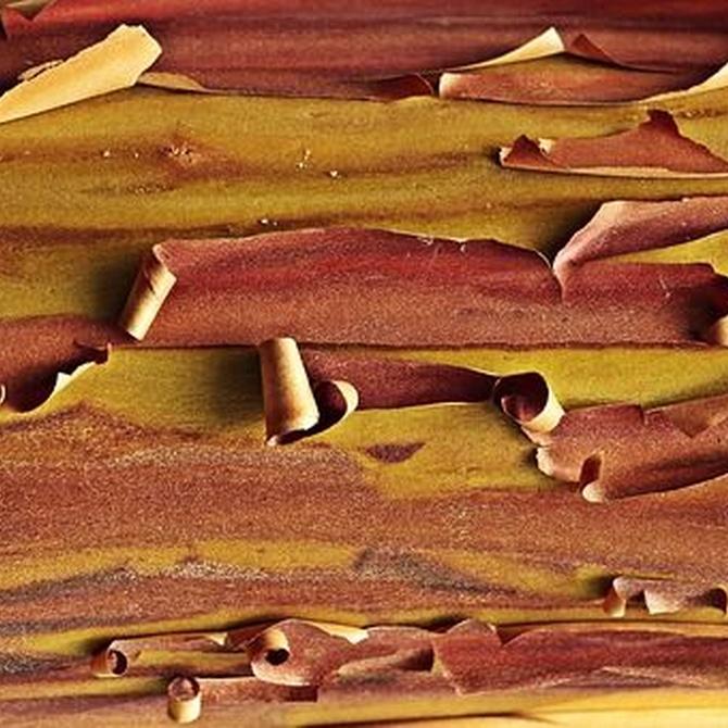 La importancia de tratar la madera