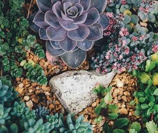 Anímate a tener tu propio jardín seco