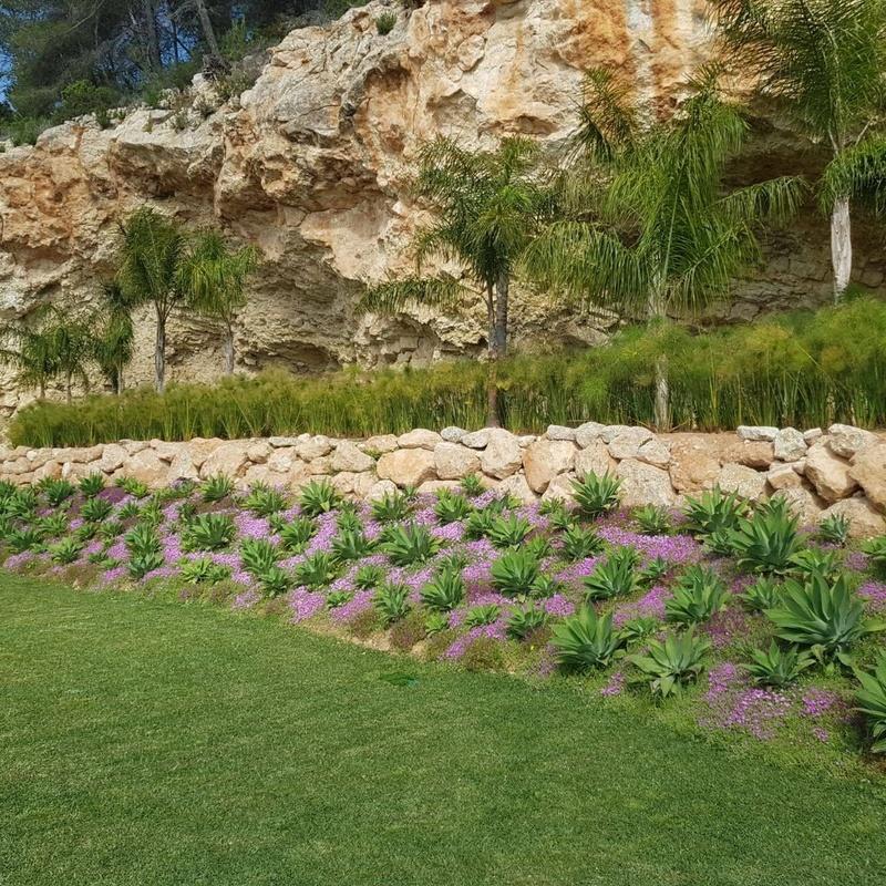 Mantenimiento: Productos y servicios de Eiviss Garden