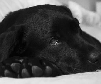 Peluquería canina: Especialidades de Clínica Veterinaria Huellas