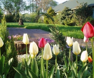 Servicios de jardinería y riego automático.