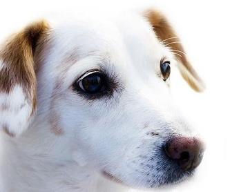 Ecografía veterinaria: Productos y Servicios de Clínica Veterinaria Manises