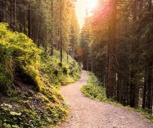 Conservación y rehabilitación de sendas y áreas recreativas en Pontevedra