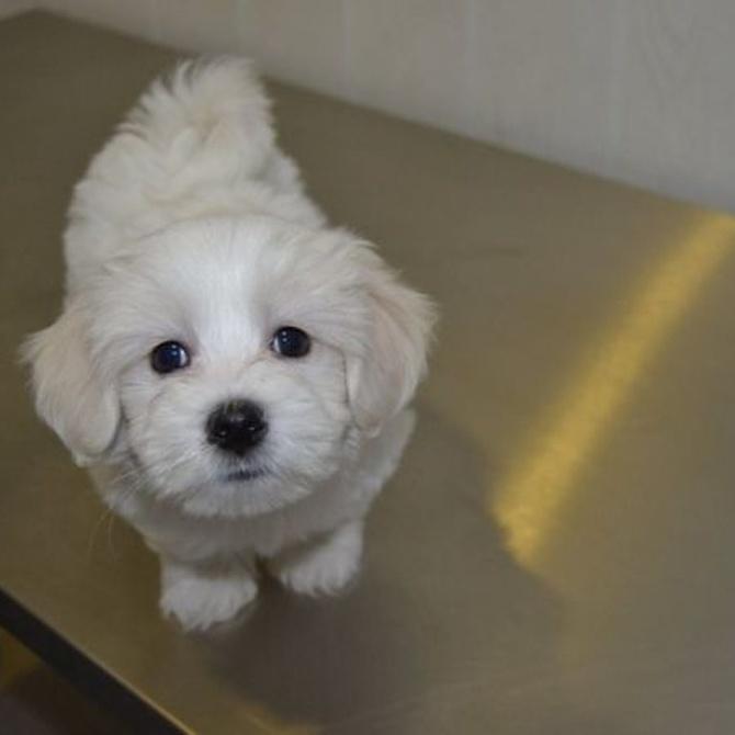 Consejos de urgencias veterinarias para escoger el pienso de un cachorro