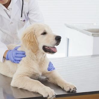 Productos y medicamentos veterinarios