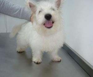 Tratamiento sanitario canino y felino