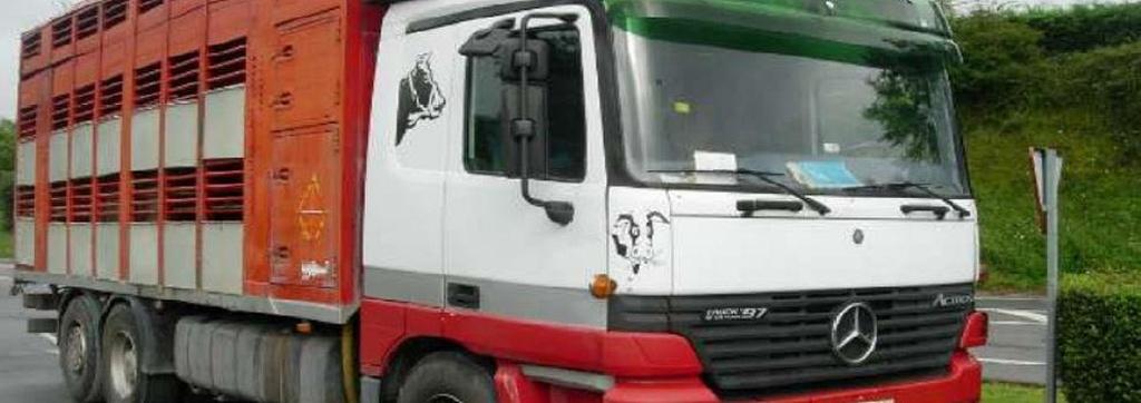 Transporte de animales Bizkaia/transporte de animales a nivel Nacional