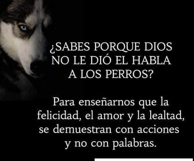 ¿ Sabes por qué Dios, no le dió el habla a los perros?